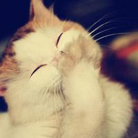 可爱猫咪qq头像:有些爱,不只是感动