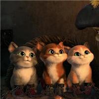 萌猫qq头像:一辈子,最动听的三句话