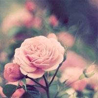 qq非主流风景头像:爱需要表白
