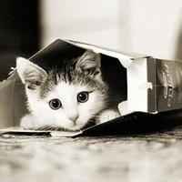 猫的qq头像:爱人爱人你最好