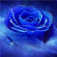 蓝色的qq头像:重重叠叠的是思念