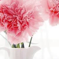 qq头像带花的女生:人生苦短