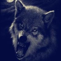 qq狼的头像:都说酒能消愁