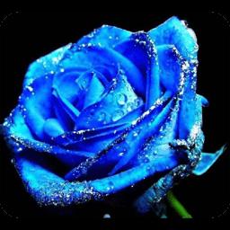 玫瑰qq头像:如果你不漂亮