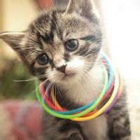 qq头像小猫咪:在一起的日子很平淡