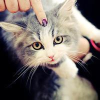 qq头像猫咪图片萌:愿把我的心嵌入你的心