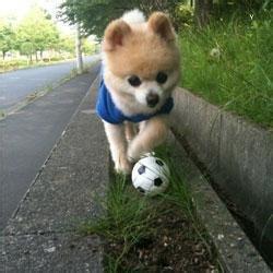 狗的qq头像:如果你是一颗流星