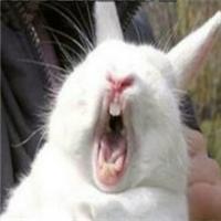 qq情侣头像兔子:一吻定情深似海