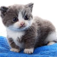 qq情侣头像猫咪:曾经爱你