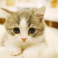 qq猫咪头像:我都舍不得欺负你