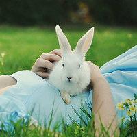 qq头像兔子:痴痴缠缠真爱一回