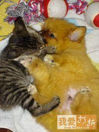 qq情侣头像带猫的:我期待有一片绿荫