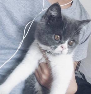 qq头像猫咪男生:爱是幸福