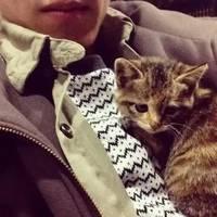 qq头像男生抱猫:时光在岁月里流转