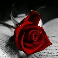 qq头像玫瑰花:爱情的伊甸园