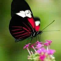 qq头像 蝴蝶:与你共享