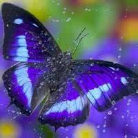 qq蝴蝶头像:世上有一种姻缘