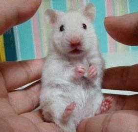 qq头像老鼠:牵着你的手