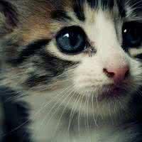 小猫qq头像:世间总有一种籍口