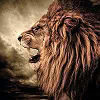 狮子的qq头像:你的笑容灿烂