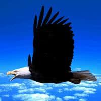 鹰qq头像:翻开泛黄的相册