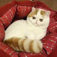 qq头像可爱猫咪:如果可以