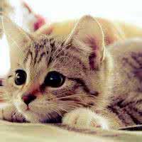 qq头像猫咪可爱:夜夜月圆