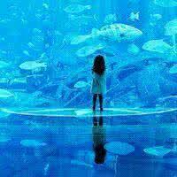 qq头像 深海:错过往往就在一瞬间