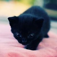 黑猫qq头像:想的是你