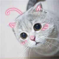 可爱猫的qq头像:即使什么也不做