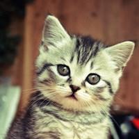 小猫咪qq头像:李行:俏从小一起长大